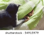 Stock photo feet under blanket and cat cuddling 54915979