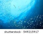 Sardines And Mackerel Fish