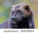 closeup portrait of the... | Shutterstock . vector #549258505