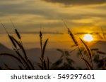 flower grass with a beautiful... | Shutterstock . vector #549297601