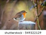 winter shot of a robin garden...   Shutterstock . vector #549322129
