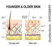 human skin changes or ageing... | Shutterstock .eps vector #549338899