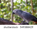 Small photo of African Gray Parrot On Branch, Shallow Depth Of Field