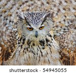Large eagle owl with big round yellow eyes