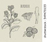 burdock medical botanical... | Shutterstock .eps vector #549470155
