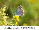 colorful butterfly closeup.... | Shutterstock . vector #549478975