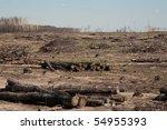 forest cut down | Shutterstock . vector #54955393