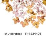 dry hydrangea | Shutterstock . vector #549634405