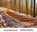 Snowy Path Leading Among The...