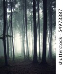 Vertical Photo Of A Forest At...