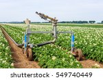 Small photo of Rollaway automatic watering gun and a long water hose in a large field with flowering potato plants on a warm day in the Dutch summer season.