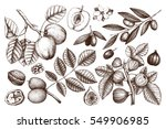 vector collection of hand drawn ... | Shutterstock .eps vector #549906985
