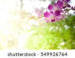 pink  blue and white orchids in ... | Shutterstock . vector #549926764