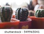 Small photo of blur cactus