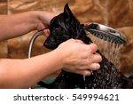 Black Puppy In The Shower