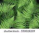 fern leaf plant background....   Shutterstock .eps vector #550028209