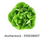 butter head lettuce vegetable... | Shutterstock . vector #550038007