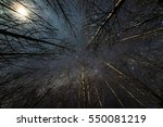 Moonlit Winter Forest With...