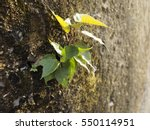 Small photo of Little tree growing up on the wall with golden sunshine. never give up, Alive, Survive , Stay alive , keep alive