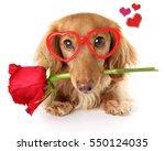 Valentines Day Dachshund Puppy...