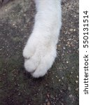 Stock photo cat s white paw feet cute 550131514