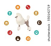 Dog Poodle  Infographic...