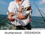 Stock photo spanish mackerel 550340434