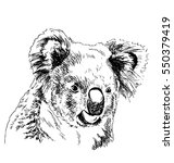 hand sketch head koala. vector... | Shutterstock .eps vector #550379419