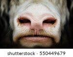 Muzzle Bull Close Up.