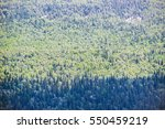 Small photo of Top view of a forest seamlesss pattern. Dark zone of a coniferous trees adjoin with bright greenwood