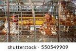 hen in a cage in chicken farm   Shutterstock . vector #550549909