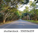 asphalt road and row of tree in ... | Shutterstock . vector #550556359