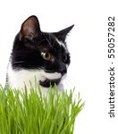 Cat In Grass Isolated On White...