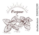 oregano. herb and spice label....   Shutterstock .eps vector #550592299