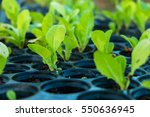 Sprout Hydroponic Vegetables...
