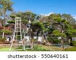 japanese professional gardener... | Shutterstock . vector #550640161