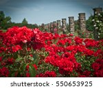 Stock photo rose garden the lidice memorial is a monument to the destruction of lidice by the nazis during the 550653925