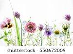 spring flowers | Shutterstock . vector #550672009