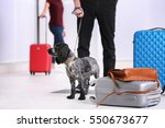 dog looking for drugs in airport | Shutterstock . vector #550673677
