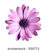 Purple Flower Isolated With...