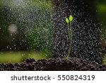 green seedling growing on the... | Shutterstock . vector #550824319