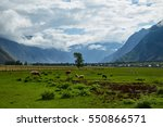 meadows for grazing in the... | Shutterstock . vector #550866571