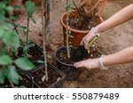 gardener's hands with shovel... | Shutterstock . vector #550879489