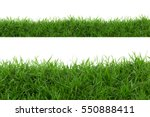 grass isolated on white...