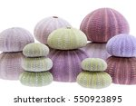 Small photo of Group of sea shells of sea urchin ( Echinoidea) isolated on white background.