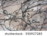 background  texture wall from... | Shutterstock . vector #550927285