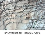 background  texture wall from... | Shutterstock . vector #550927291