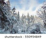 beautiful landscape forest on a ... | Shutterstock . vector #550954849