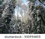 beautiful landscape forest on a ... | Shutterstock . vector #550954855