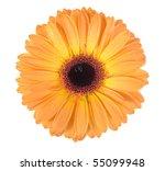 One Orange Flower With Dew...